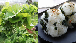 How to Forage and Cook Sansai (山菜) in Spring in Japan