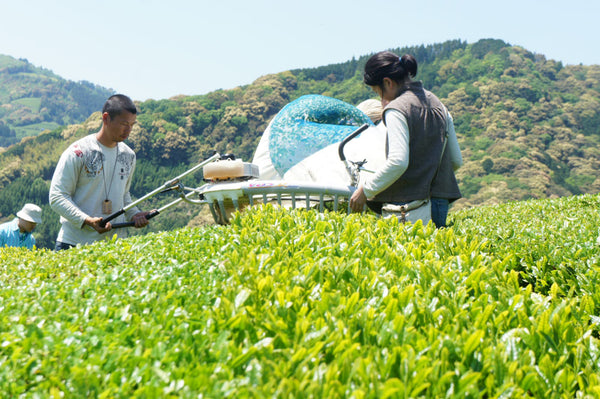 Recommended Videos About Tea in Shizuoka