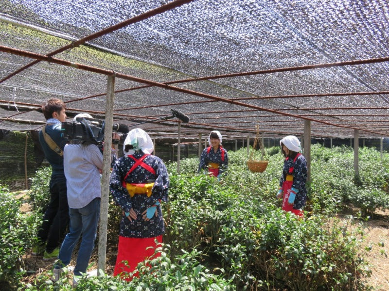 2015/06/30: TV crew came to film tea picking