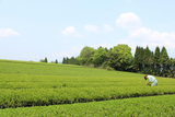 Takarabako Tea Farm in Shimane