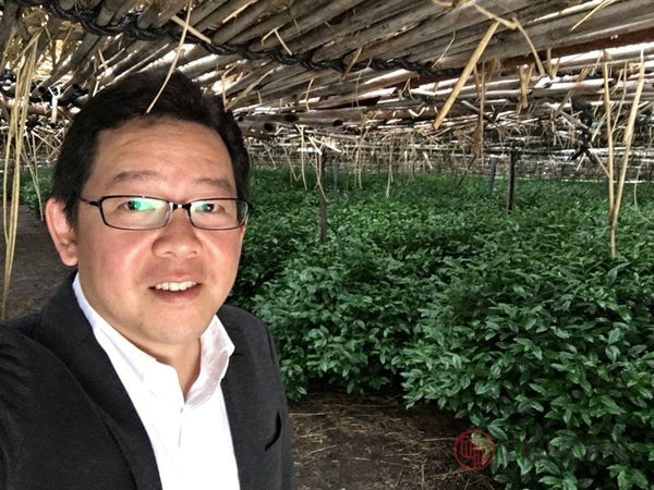 Traditional canopy shading at tea fields used by Yunomi's producer for the Yunomi Factory Direct organic matcha. (Yunomi tea merchant Ian taking a selfie...)