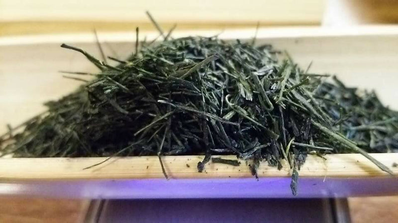 Kuma Tea Gardens: Yamecha Saemidori Heritage Grade Gyokuro Tenkaichi - 71st All Japan Tea Competition Grand Prize Winning Garden