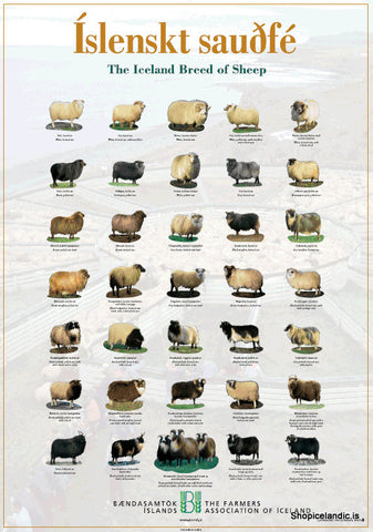 - Icelandic The Iceland Breed of Sheep - Poster (L) - Poster - Nordic Store Icelandic Wool Sweaters