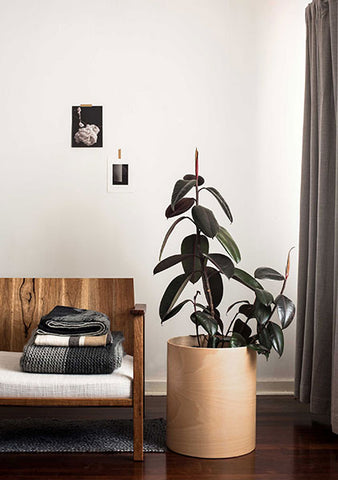 Introduce indoor plants with the Plyroom Flor planter
