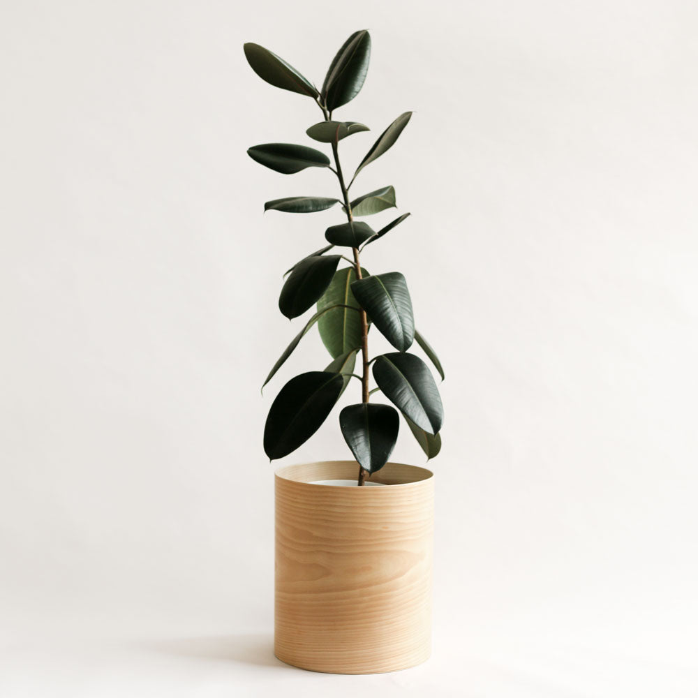 Plyroom Flor Planter