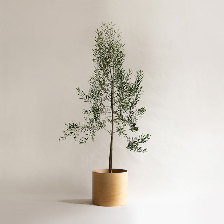 large flor planter with olive tree