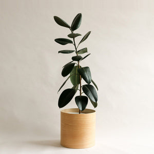 Flor Planter for Indoor Plants with Rubber Plant