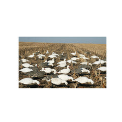 AVERY 12 Pack of Pro-Grade Snow Goose Shells Harvester Decoys (71065)
