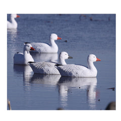 AVERY 4 Pack of Pro-Grade Snow Goose Floaters Active Decoys (71088)
