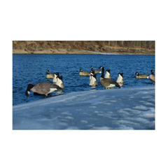 AVERY Pair of Pro-Grade Honker Butt-Up Feeder Decoys (71099)