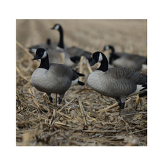 AVERY FFD Elite Full Body Honkers Active Pack Decoys With 6 Slot Bag (71574)