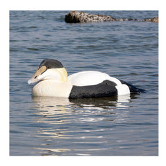 AVERY 4 Pack of Commercial Grade Foam Filled Eider Decoys (74028)