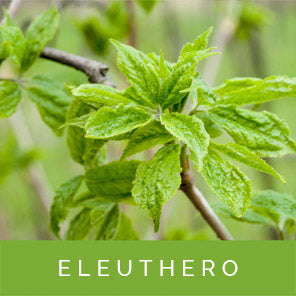 eleuthero-for-stress-relief