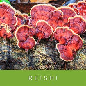 reishi-for-stress-relief