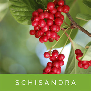 Schisandra for Stress Relief