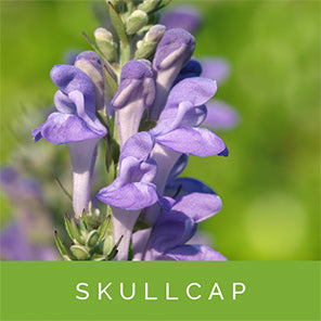 skullcap-for-stress-relief