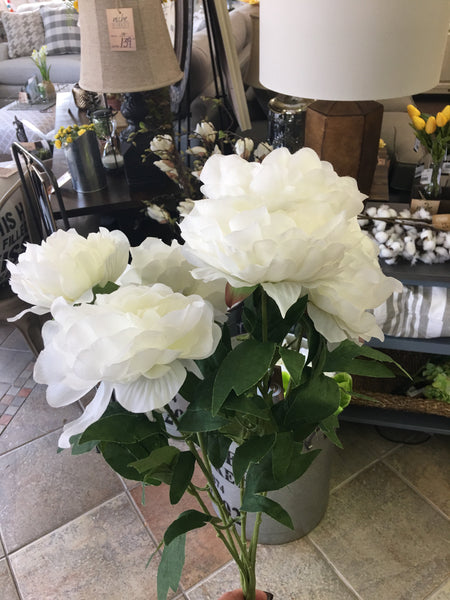 6 Bloom White Peony Bush