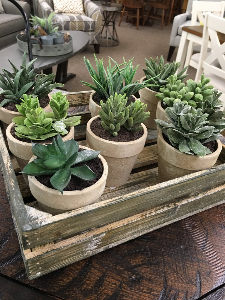 Mini Wooden Pot Succulent Assorted