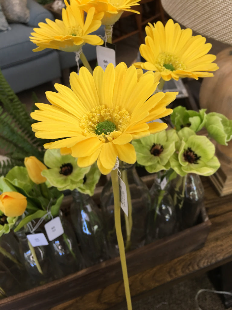 Yellow Gerbera Daisy Stem
