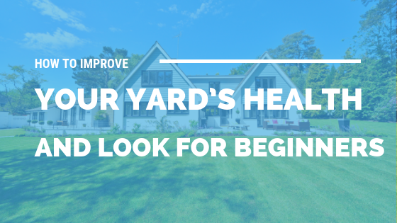 How to Improve Your Yard's Health and Look for Beginners [506 Words] - article > 500 - Article Blizzard