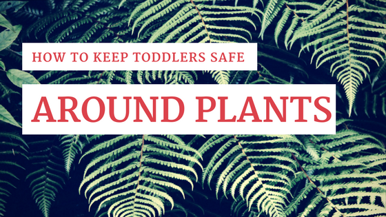 How to Keep Toddlers Safe Around Plants [544 Words] - article > 500 - Article Blizzard