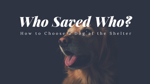 Who Saved Who? How to Choose a Dog at the Shelter [674 Words] - article > 600 - Article Blizzard
