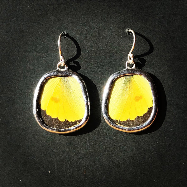 Sulphur Butterfly Earrings