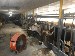 An Unforgettable Day at the Mill Valley Milk Farm