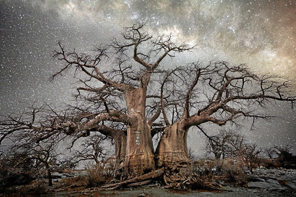 Beth Moon, the Woman Who Chronicles Sacred Trees