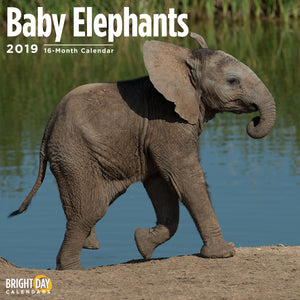 Baby Elephants 2019 Wall Calendar