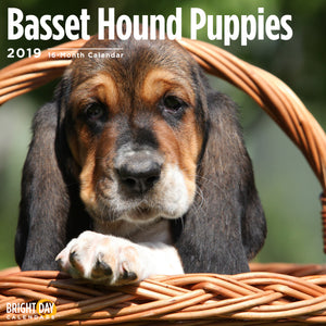 Basset Hound Puppies 2019 Wall Calendar