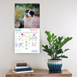 Australian shepherd dog breed calendar on the wall