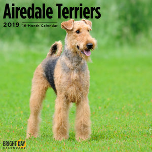 Airedale Terriers 2019 Calendar beautiful dog breed