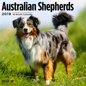 Cute Australian Shepherd dog calendar cover