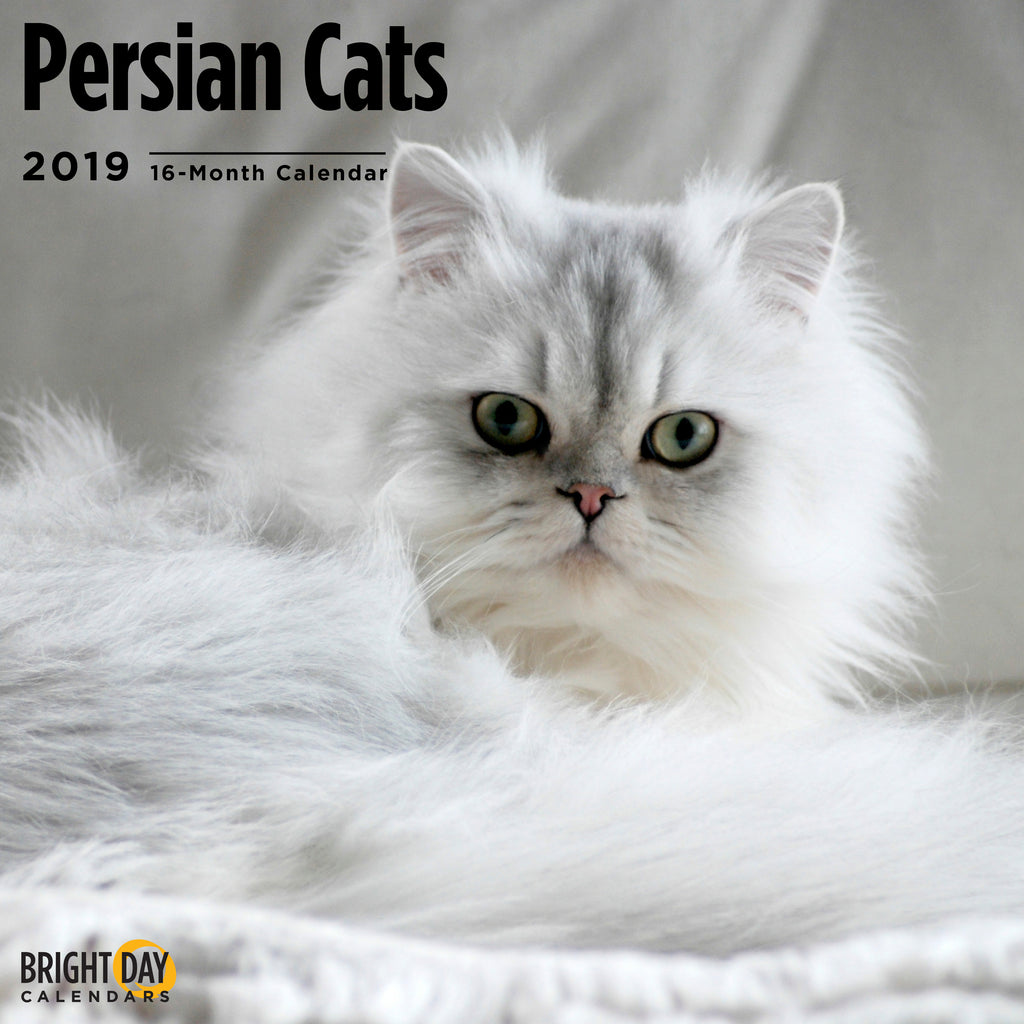 Persian Cats 2019 Wall Calendar