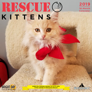 Rescue Kittens 2019 Wall Calendar
