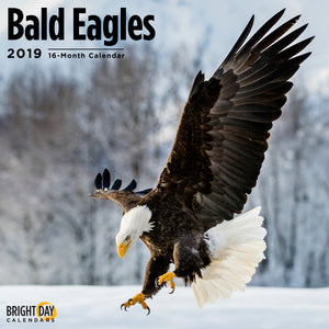 Bald Eagles 2019 Wall Calendar