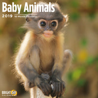 Cute baby monkey on the cover of a calendar
