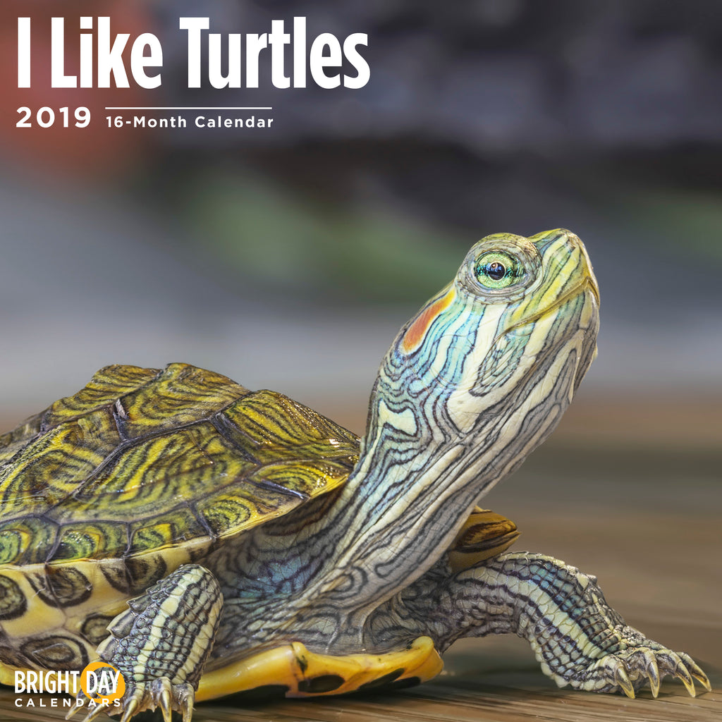 Turtles 2019 Wall Calendar