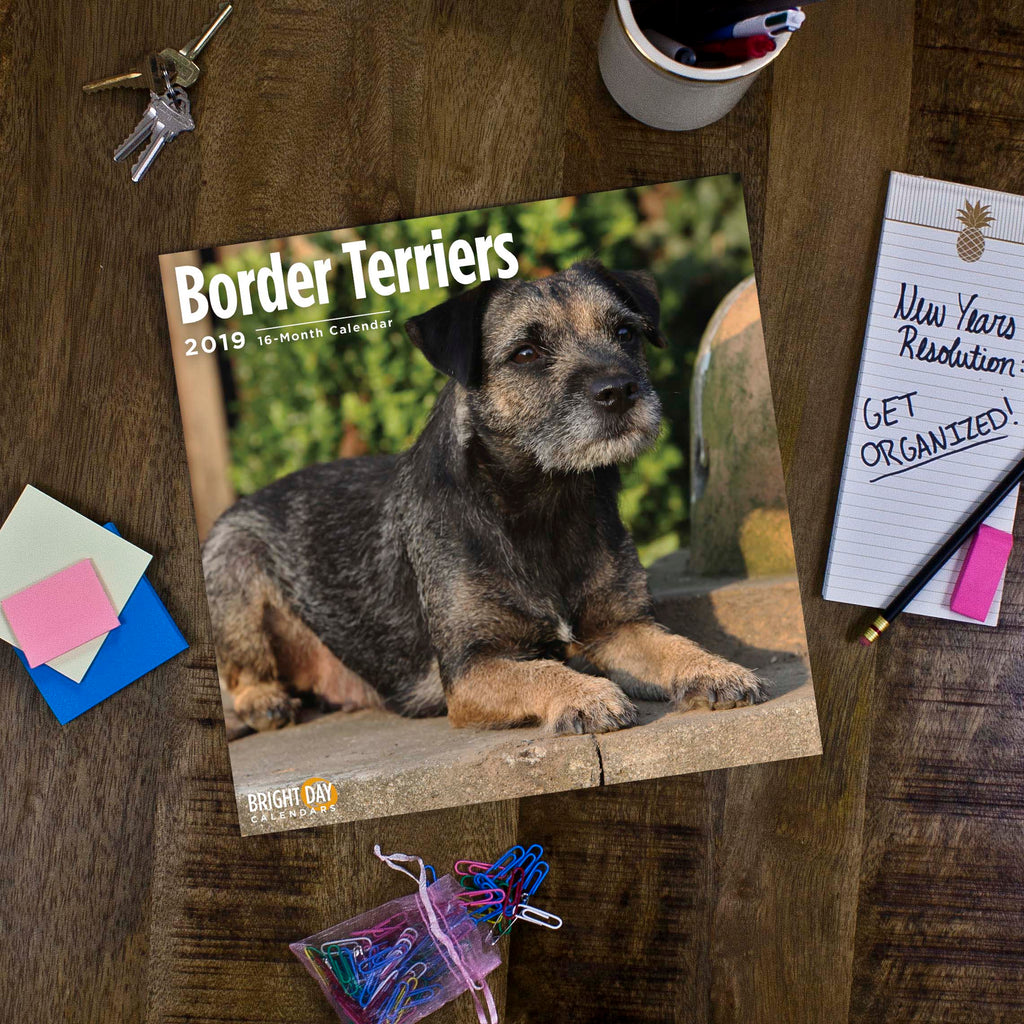 border terrier 2019 wall calendar