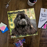 Newfoundlands 2019 Wall Calendar