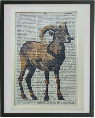 Argali Sheep Print No.776, animals