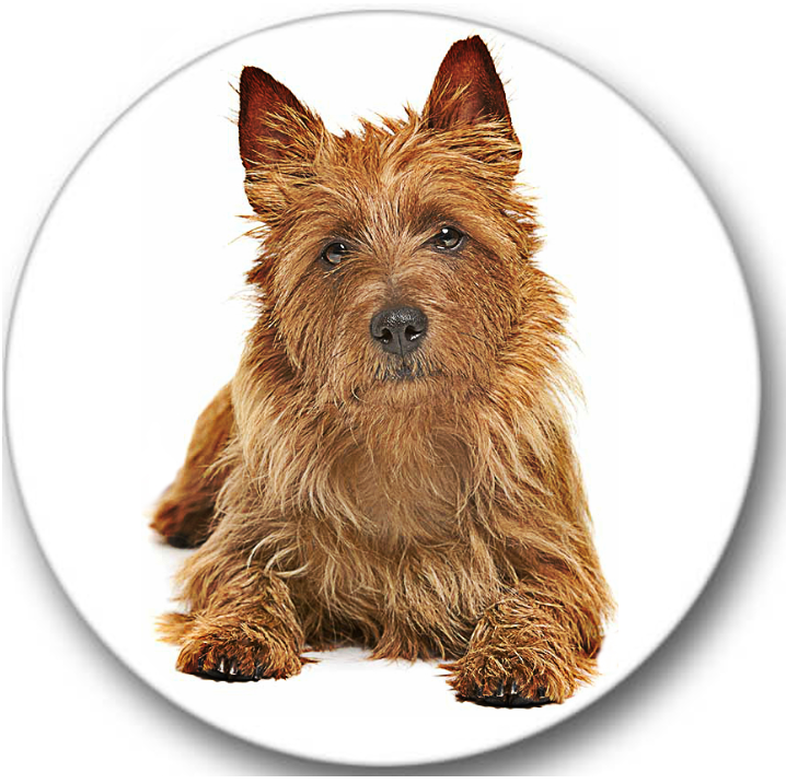 Australian Terrier Dog Sticker Seals No.136