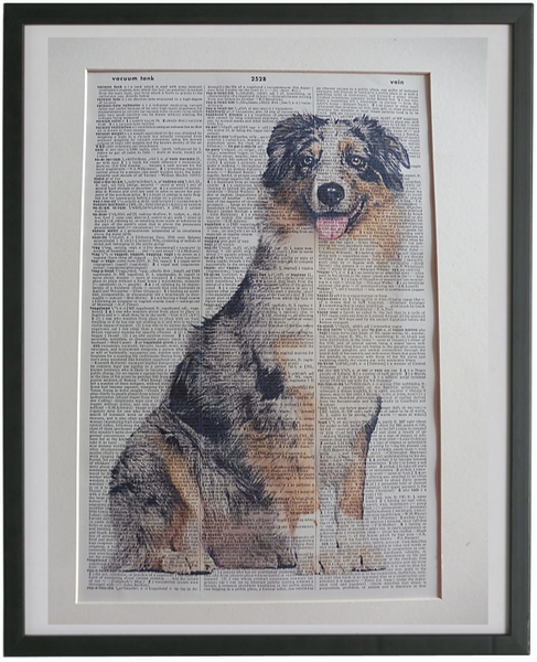 Australian Shepherd Dog #4 Wall Print No.955
