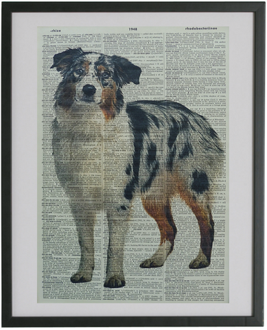 Australian Shepherd Dog #2 Wall Print No.572