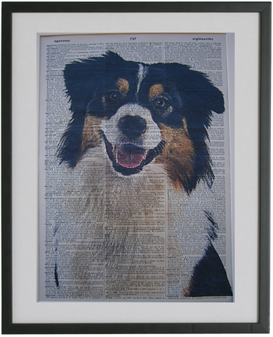 Australian Shepherd Dog #3 Wall Print No.66