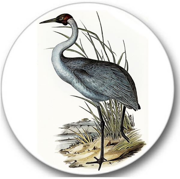 Australian Crane Bird Sticker Seals No.884, bird prints
