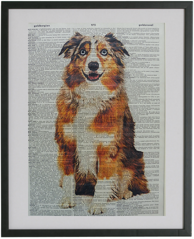 Australian Shepherd Dog #1 Wall Print No.262