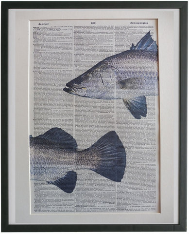 Barramundi Fish Wall Print No.801