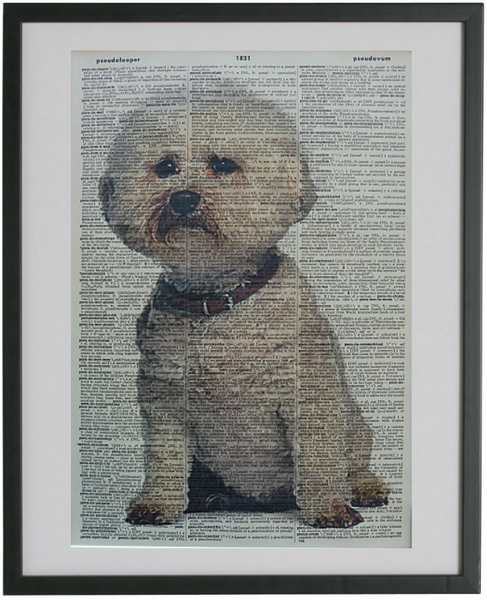 Bichon Frise Dog Print No.548